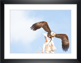 "Wandbild ""Eagle"""