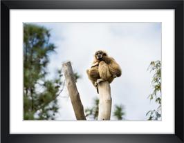"""Wandbild """"Primaten"""""""