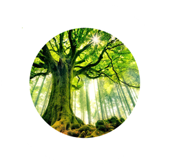 CD : Fruits et pépins de notre arbre généalogique par Aude Zeller