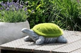 Schildkröte grün beflockt