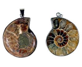 Pendentif Ammonite 5978