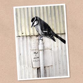 Postkarte -Piepmatz- individualisierbar