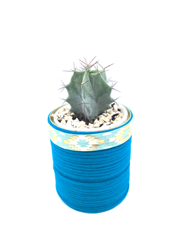 CACTUS CAN - JERSEY YARN TEAL