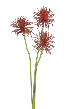 Xanthium spray red