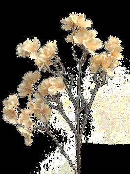 Blüte lachs gefrostet