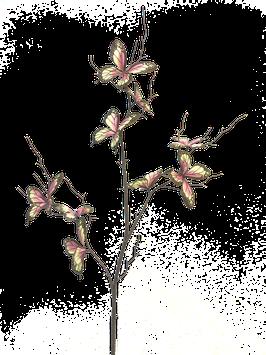 Schmetterlingszweig Pink/yello 76 cm