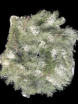 Pine Weinachtskranz Schnee