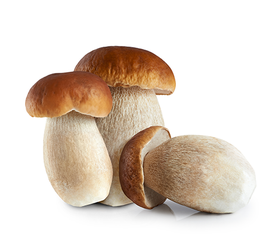Porcini interi Top Quality gr 500