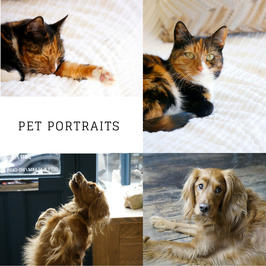 Pet  Portraits Photo Sessions in Southsea starting from