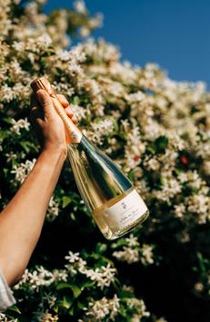 Conti Thun BOLLE GIOIA - Vino Spumante Brut Bianco