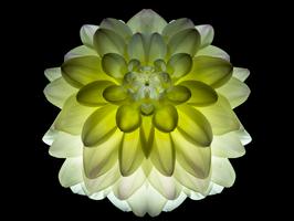 Photoprint Dahlia yellow