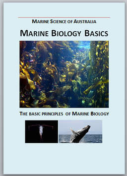 Marine Biology Basics