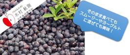 Hokkaido木村秋則自然栽培農学校 2021年産冷凍ハスカップ1kg (500g×2)
