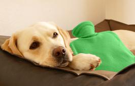 Futterplan für kranke Hunde