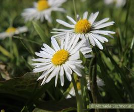 Online Seminar: Pflanzenheilkunde für Neueinsteiger