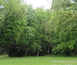 """Manuskript & Waldspaziergang """"Die Bedeutung der Farbe Grün"""""""