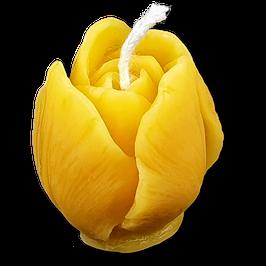Tulpe, mini