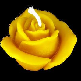 Rose, mittel