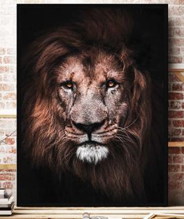 Cadre - toile Lion de face