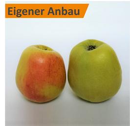 Apfel - Glockenapfel
