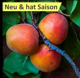 Aprikosen (klein)