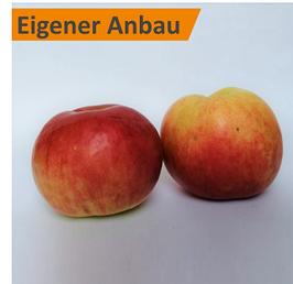 Apfel - Idared