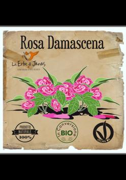 Rosa Damascena Erbe di Janas