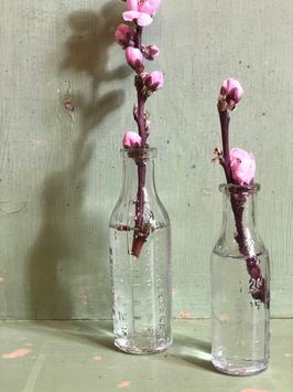 Petite fiole verre gradué