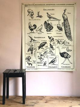 Affiche scolaire oiseau