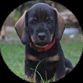 10. Welpe/Junghund kleine Hunderassen bis 15 kg Endgewicht
