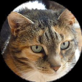 21. Kranke Katze