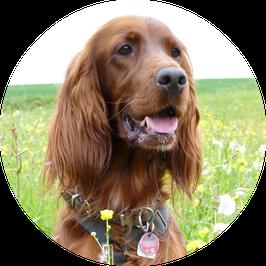 12. Erwachsener gesunder Hund