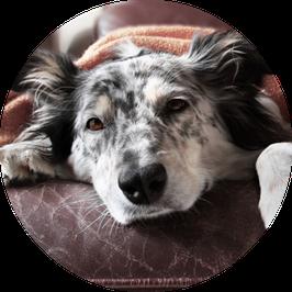 13. Kranker Hund