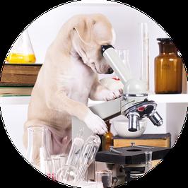 30. Laboruntersuchungen (Preise auf Anfrage)