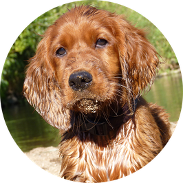 11. Welpe/Junghund große Hunderassen