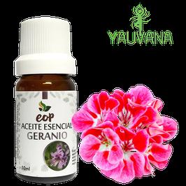 Aceite Esencial de Geranio / Geranium (Pelargonium graveolens) 100% Puro - Frasco x 10 ML