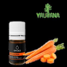 Aceite Esencial de Semillas de Zanahoria / Carrot Seed (Daucus Carota) Orgánico, 100% Puro - Frasco x 5 ml