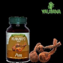 Huanarpo Macho (Jatropha Macrantha) - Frasco x 100 cápsulas x 400 mg c/u