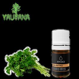 Aceite Esencial de Culantro / Coriander (Coriandrum Sativum) 100% Puro - Frasco x 5 ml