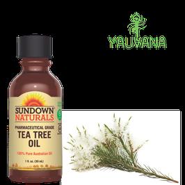 Aceite Esencial de Arbol de te / Tea tree Oil (Melaleuca alternifolia) - Frasco x 30 ml