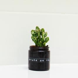 Jar Medium. STUCK ON YOU