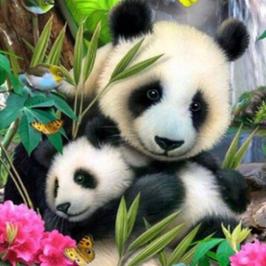 Panda's 2 - D18164
