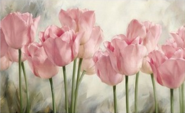 Roze tulpen - H18158