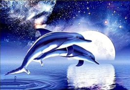 Dolfijnen - D18162