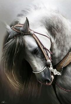 Paardenkop - D18145