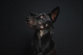 Geschenkgutschein Hundeshooting