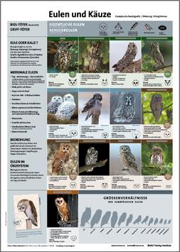 Eulen und Käuze: Für Jäger- und Falknerprüfung