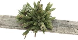 Tillandsia minutiflora