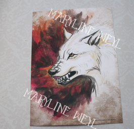 carte postale loup blanc