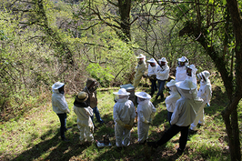 Stage ruches de biodiversité et Warré reprise prévue été 2021